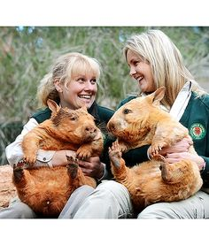 Rare golden southern hairy-nosed wombats are pictured with their keepers at Cleland Wildlife Park in Adelaide, Australia. Golden wombats are generally unseen in the wild, as their lighter color makes them susceptible to prey. These cuties are named Icy and Polar. Theyre very young now, but its hoped that the pair will one day be suitable for breeding. What a beautiful species!
