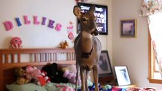 Meet Dillie, the rescued deer that rules the roost