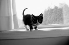 One of my favorite kitten photographs ever!