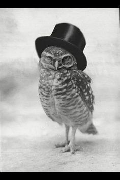 Nothing is quite as amazing as an owl in a tophat.
