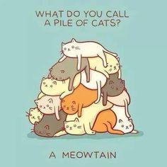 crazy cats, cat mountain, cat pun, cat jokes, crazy cat lady, cat memes