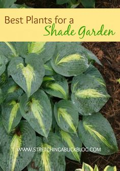 How to Plant a Shade Garden Best Plants for a Shade Garden