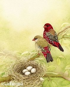 The Finch Family  8x10 archival watercolor by TracyLizotteStudios