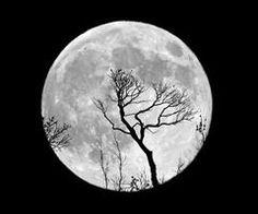 the moon, the moon, the beautiful moon
