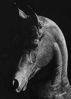 Dignity - scratchboard | Flickr - Photo Sharing!