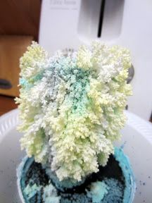 Preschool Science Crystal Trees | LDS Craft Project