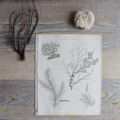 sealif snail, marines, marin life, inspir, antiqu marin