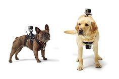 GoPro Fetch #gopro #camera #tech