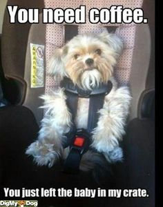 Lol. Puppy humor. Hope I dont do this lol