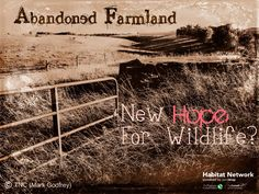 Abandoned pastures h