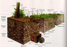 Rocks and Soil: Lesson Plans, Worksheets, Printables