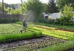 Small-scale urban farms limit fossil fuel use by reducing the distance that food needs to travel to reach markets. Companies like SPIN-Farming are dedicated to rebuilding local food systems by working to bring farms to all geographical areas. Credit: SPIN-Farming LLC  forbes.com