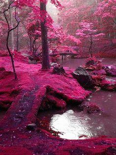park, dream, color, pink, forest, bridg, place, bucket lists, moss garden