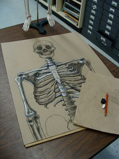 Awesome skeletal drawing.  Could use this approach with O'Keeffe skulls, and then add one of her desert backgrounds.