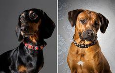 Dog Collars from Northernmoods via The Stately Hound  www.thestatelyhound.com