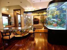 aquariums in the kitchen