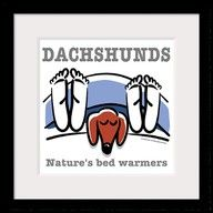:) Buddy dachshund doxi