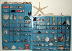 Seashell best box