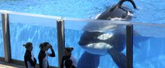SeaWorld, as we know it today, is over. It's only a matter of time. The company is finished. Here's why.