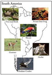 Animals of the Continents animals, montessori learn, printabl montessori, montessori geographi, homeschool, print shop, montessori print, contin, social studi