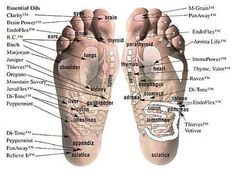 charts, vita flex, young living, essential oils, health, young live, foot reflexology, essenti oil, vitaflex