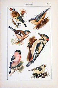 Set of two prints of birds