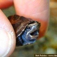 LOVE turtles