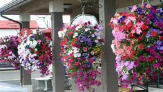 The ideal hanging basket container~wonder if I can make this not paying that much for a pot with holes