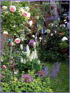 Why I love my garden!