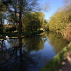 http://www.visitcambridge.org/whats-on/tour-de-france-2014-stage-3-cambridge-p581901