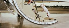Wings up, paws down: How to fly with your pet