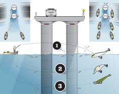 Catch More Bass Under Bridges With These Tips from Pro Angler Aaron Martens