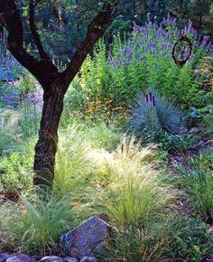 San Francisco garden, native plants #designsponge #dssummerparty
