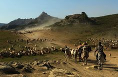 Altay, China: Kazakh nomads herd their livestock across a plain in the Xinjiang region