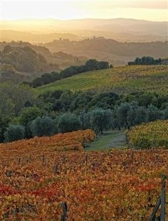 chianti wine country - Tuscany
