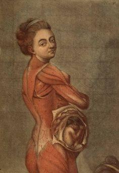Medicina, Historia y Arte: Ilustración anatómica de una mujer embarazada (Siglo XVIII)