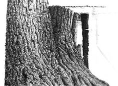 Drawing Trees and Their Bark: Stumps and Trunks