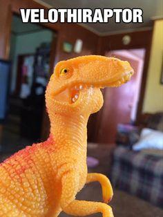 My kinda raptor