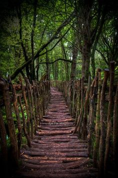 Puzzle wood bridge, England. Talk about serenity!