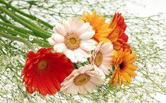 25+ Cute And Lovely Flower Wallpaper http://1opx.com/photography/25-cute-and-lovely-flower-wallpaper/