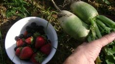 onions, creat, grow organ, lettuce, environ, organ strawberri, families, garden, companion planting