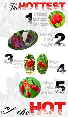 The world's #hottest #peppers - Discover more in this #Infographic - http://www.finedininglovers.com/blog/food-drinks/the-world-s-hottest-peppers-infographic/