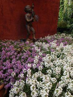 Hail  the anti-mums by Elizabeth Licata http://gardenrant.com/2014/10/hail-the-anti-mums.html?utm_source=rss&utm_medium=rss&utm_campaign=hail-the-anti-mums   http://idealshedplans.com/backyard-storage-sheds/