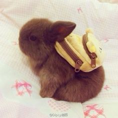 It's a baby bunny... Wearing a backpack. You are welcome