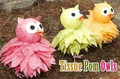 tissue pom owls