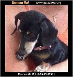 — California Dachshund Rescue — ADOPTIONS —RescueMe.Org