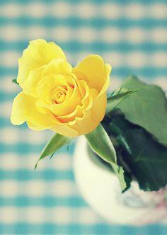 {yellow, aqua, gingham}