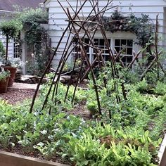 How to Use a Vegetable Planting Chart to Grow Vegetables - Excellent ! The Gardening Experts