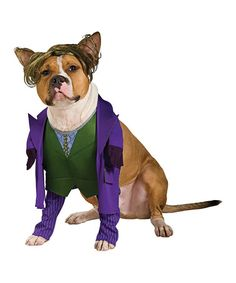 This The Joker Pet Costume is perfect! #zulilyfinds