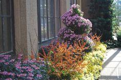 Beautiful  Longwood Gardens Mum Show